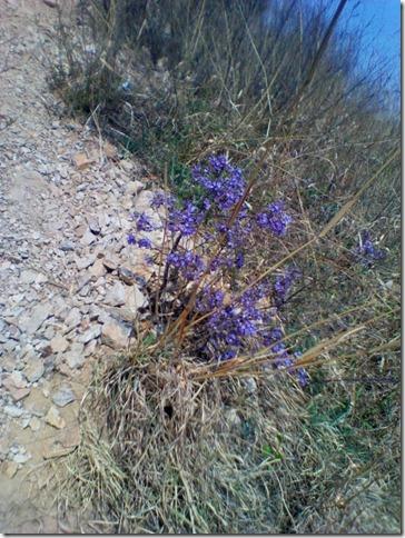 www.5169.info__2011-04-28 09-51-47